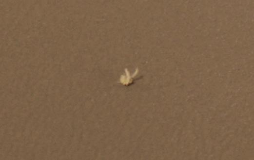 Марсоход Opportunity обнаружил живое существо на Марсе