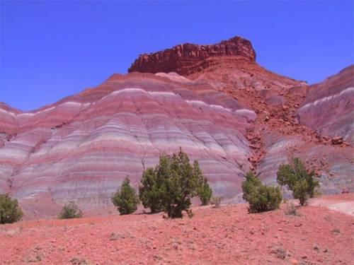 Магический цвет пустыни в Аризоне