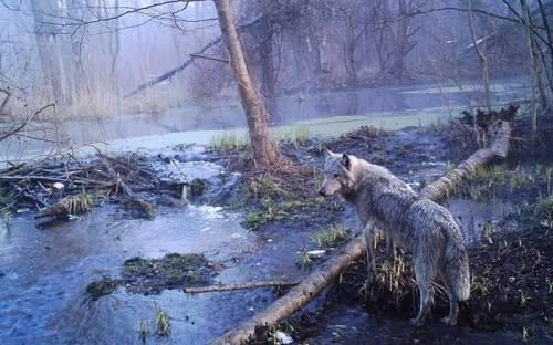 chernobil-03_500x312
