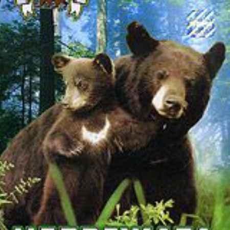Купить Медвежата: Почти медведи