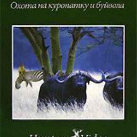 Купить Жемчужина Африки 2: Охота на куропатку и буйвола. Фильм 25