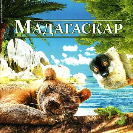 Купить Мадагаскар