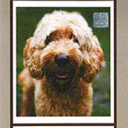 Купить Собаки от А до Я: Лаготто