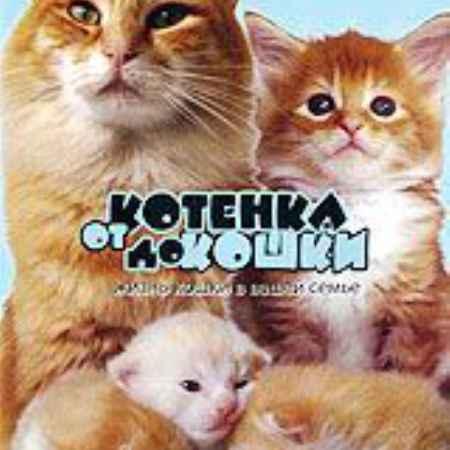 Купить От котенка до кошки