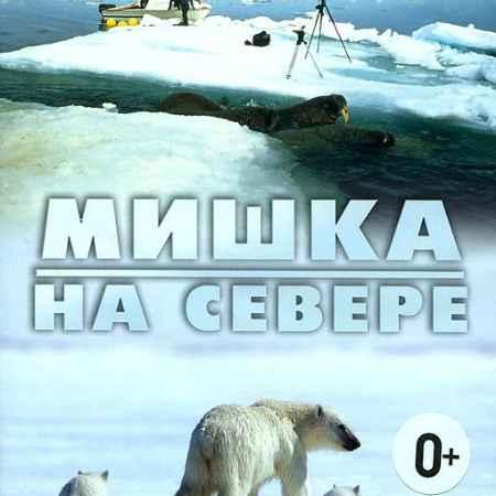 Купить Мишка на Cевере: В поисках ледяного пути