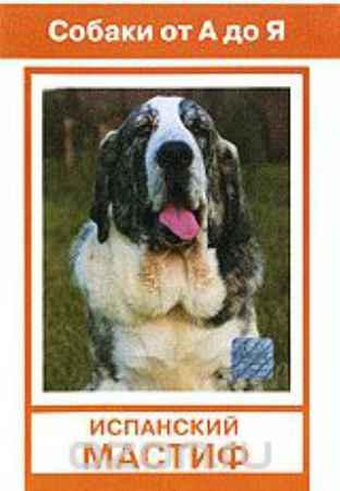 Купить Собаки от А до Я: Испанский мастиф