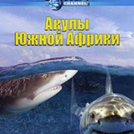 Купить Discovery: Акулы Южной Африки