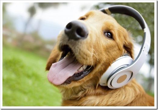 Другие полезные приспособления для собак