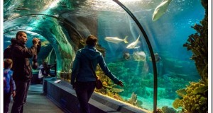Океанариум и рынок Адлера